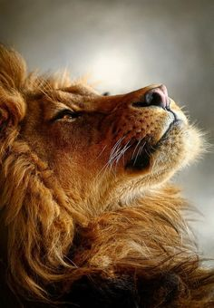 .Ever since reading The Lion, the Witch, and the Wardrobe, this is how I imagine the Lord to be when he comforts me.