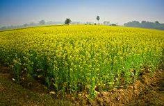 Beauty of an Indian village (ratulm)