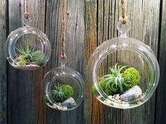 Un terrario es un mini jardin creado en el interior de cualquier recipiente de vidrio. Los terrarios son perfectos para el interior de la c...