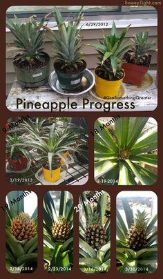 photo pineapple-non-express_zpsb496c209.jpg