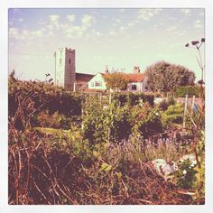 Great British Allotment