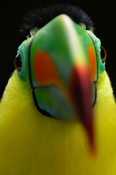Brilliantly coloured parrot