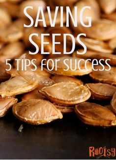 Organic Vegetable Gardening 5 Tips for Successfully Saving Seeds - Successfully saving seeds is easy once you know where to start. Save money on seed purchases and have a steady source of seeds to plant for years to come. Home Grown Vegetables, Fall Vegetables, Organic Vegetables, Growing Vegetables, Growing Tomatoes, Saving Seeds From Vegetables, Veggies, Growing Herbs, Indoor Vegetable Gardening