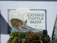 Cayman Turtle Farm, Grand Cayman Island. Had an amazing time there. Can't wait to go back