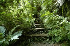 Almost overgrown, this stairway creates mystery. Actually, it leads up to Quinsam Road from great fly fishing holes on the Quinsam River in Campbell River. Fly Fishing For Beginners, Vancouver Island, Stairways, Roads, Paths, Mystery, To Go, Bucket, River