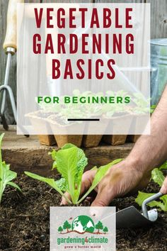 How To Work With Nature And Set Up A Vegetable Garden That Works. Snap Here For Vegetable Gardening Tips By How To Work With Nature And Set Up A Vegetable Garden That Works. Snap Here For Vegetable Gardening Tips By Vegetable Garden For Beginners, Backyard Vegetable Gardens, Gardening For Beginners, Garden Tips, Garden Care, Bay Leaf Plant, Bay Leaf Tree, Bay Leaves, Planting Vegetables