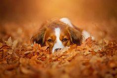 Herbst | by Kooikerhondje
