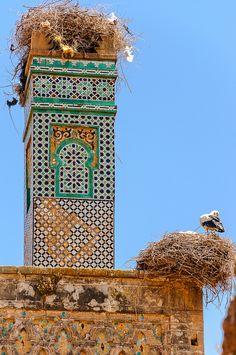 Les cigognes du Maroc.