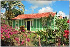 Bauernhaus inmitten einer Kakaoplantage