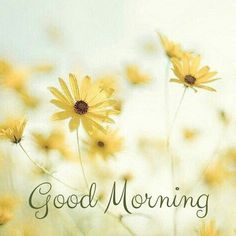 24 Good Morning Cards to Help you Start the Day Latest Good Morning, Good Morning Cards, Morning Love, Good Morning Flowers, Good Morning Messages, Good Morning Good Night, Good Morning Wishes, Good Morning Quotes, Morning Rain