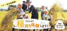 参加者募集 ささかみ 稲刈り体験ツアー