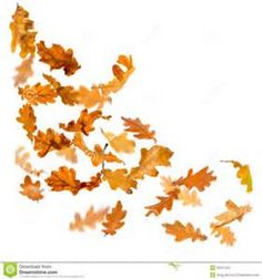 drawings of falling leaves - Bing images