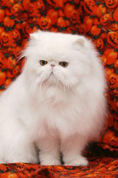 17 Ideas De Gatomon 7u7 Gatitos Lindos Gatos Bonitos Gatitos Adorables