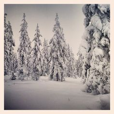 Lapland. Mad about it.