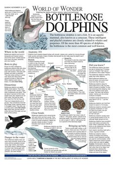 Basic Dolphin Anatomy Diagram and Worksheet | Dolphins ...