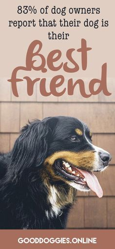 It's official. Your dog makes you a better person. Read the results and find the benefits of owning a dog.