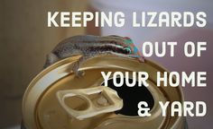 How+to+Get+Rid+of+Lizards