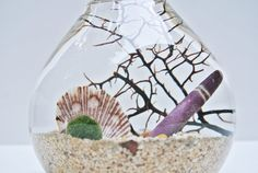 Urchin's Spotted Gaze Aqua Terrarium   Marimo Ball