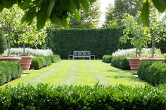 Expansive lawn surrounded by boxwood and potted trees (for when you don't have topsoil to grow them in.