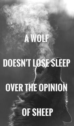 a wolf never misses sleep over the opinion of sheep - Bing Images