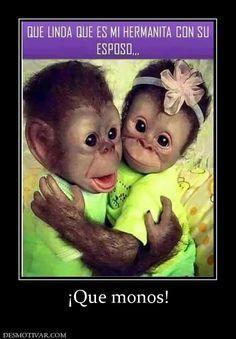 Desmotivaciones ¡Que monos!