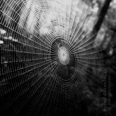 Spiderweb - West Rim Trail, Pennsylvania