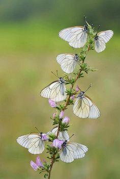 Butterflies on flowers....
