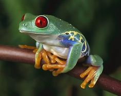 40 Beautiful Pictures of African Animals with Horns - Tiere EUT Frog Wallpaper, Animal Wallpaper, 1920x1200 Wallpaper, Wallpaper Art, Desktop Wallpapers, Funny Frogs, Cute Frogs, Frog Pictures, Animal Pictures