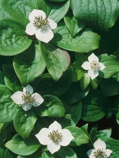 Learn about groundcover plants that will thrive in damp shade and grow successfully in your lawn and garden spaces.