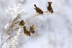 Winter Meal ~ photo by Andrey Kostenko