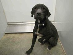 URGENT! OWEN # A053080 IS URGENT AND HAS UNTIL 3 PM ON 3/20/2014 TO BE OUT OF THE SHELTER!!! He's a good looking 2 yr old Black Lab mix. He's currently RESCUE ONLY at the Mobile County Animal Shelter in Mobile Alabama! He's RESCUE ONLY because he's limping & he has hair loss. Owen needs out and to get to the Vet!! Please share him! He deserves a chance just like any other pet! https://www.facebook.com/photo.php?fbid=661571417229480&set=a.193103557409604.60105.193102227409737&type=1&theater