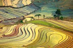 Beautiful Rice fields.