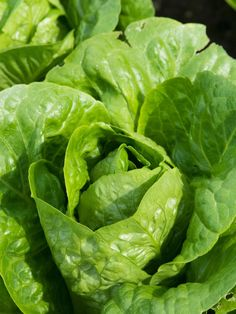 These 8 Lettuce Varieties Do Well in Containers --> http://www.hgtvgardens.com/photos/vegetables-photos/the-best-types-of-lettuce-for-containers?soc=pinterest