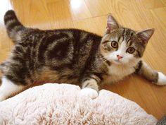 どうも、チビまるです。 Hi, I am little Maru!