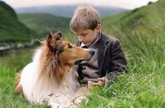 Today in 1947 - Lassie debuted on ABC radio. It was a 15-minute show about an extraordinary dog. Lassie's barking on the radio was provided by the star of the movie Lassie Come Home, a collie named Pal. Animal imitator Earl Keen provided the whines and other dog noises. The announcer was Charles Lyon; Marvin Miller and Betty Arnold played Lassie's owners. The sponsor was Red Heart dog food.