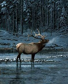 Persis Clayton Weirs Lonesome Bull Elk Sé q no es un gato, pero lo guardé en… Large Animals, Animals And Pets, Cute Animals, Wildlife Photography, Animal Photography, Hirsch Tattoo, Bull Elk, Deer Family, Elk Hunting