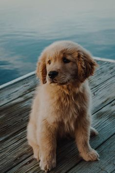 The perfect pup #picturesofbabypuppies