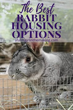 Meat Rabbits Breeds, Raising Rabbits For Meat, Raising Quail, Raising Farm Animals, Rabbit Breeds, Raising Goats, Show Rabbits, Pet Bunny Rabbits, Pet Rabbit
