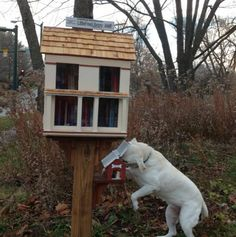 OMG, doggie treats! Love!~  am in love with these Little Free Libraries! Here's one for animal lovers. :-) by Will Thomson. Iowa City, IA.
