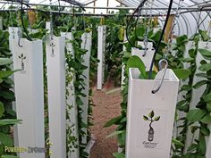Whether you run an aquaponics or hydroponics system, understanding the proper ZipGrow Tower Flow Rates is crucial to maintaining nutrients and system health Vertical Hydroponics, Vertical Farming, Aquaponics Diy, Hydroponics System, Atlanta, Plaque Psoriasis, Vertical Garden Wall, Mosquito Repelling Plants, Tower Garden