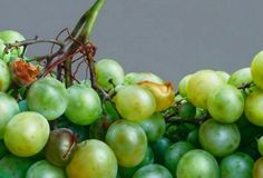 Cuadro de uvas