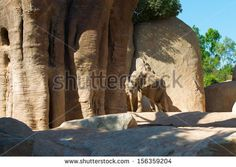 The elephant looks for a cool about a baobab - stock photo