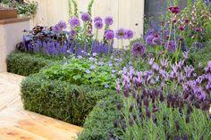 Landscaping With Rocks, Front Yard Landscaping, Edging Plants, Perennial Border Plants, Purple Plants, Lavender Garden, Sun Perennials, Bee Friendly, Garden Cottage