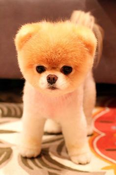 The 20cutest puppies inthe world