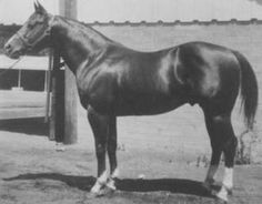 """Doc Bar"" - 1956 Chestnut Quarter Horse Stallion -- Patience's Grandpappy"
