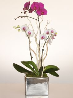 Our Signature Orchid Arrangements + Orchid Club Membership