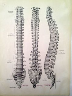 This drawing of the spine is everything.