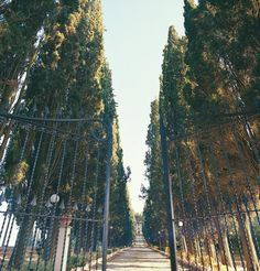 Traditional Cypress aisle