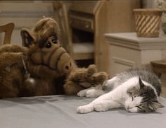 Alf's complicated relationship with cats. | 16 Reasons We Loved NBC Sitcoms In The '80s