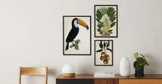 Framed Wall Art, Wall Art Prints, Framed Prints, Toucan Toco, Mid Century Living Room, Natural History Museum, Illustrations, Soft Furnishings, Your Design